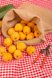 Freshly picked loquats Royalty Free Stock Image