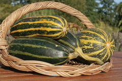 Freshly picked marrows. Closeup on basket royalty free stock images