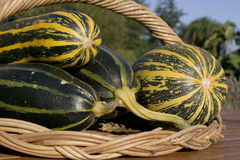 Freshly picked marrows closeup Royalty Free Stock Photos