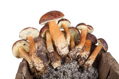 Freshly picked mushrooms in an old wicker basket isolated on whi Royalty Free Stock Photography