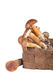 Freshly picked mushrooms in an old wicker basket isolated on whi Stock Image