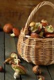 Freshly picked mushrooms in a wicker basket Stock Image