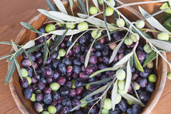 Freshly picked olives Stock Images