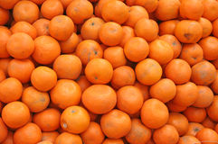 Freshly picked oranges india royalty free stock photography