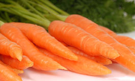 Freshly picked organic carrots Royalty Free Stock Photography