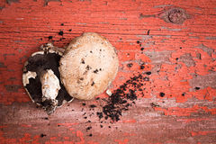 Freshly picked organic portobello mushrooms Stock Photo