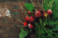 Freshly picked organic red radishes on wooden table. Soil dirt on vegetables, selective focus Stock Images
