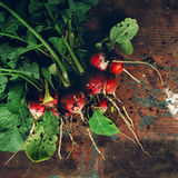 Freshly picked organic red radishes on wooden table. Soil dirt on vegetables, selective focus Stock Photos