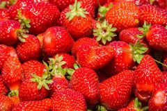 Freshly picked organic strawberries. San Francisco bay, California; background for fruit, summer, healthy eating Stock Photos