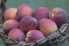 Freshly picked Peaches in Basket Stock Photo