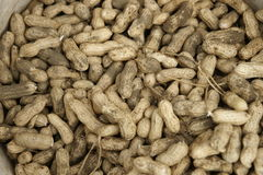 Freshly picked peanuts. Stock Photography