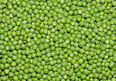 Freshly Picked Peas Royalty Free Stock Image