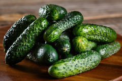 Freshly picked pickles from the garden Royalty Free Stock Photography