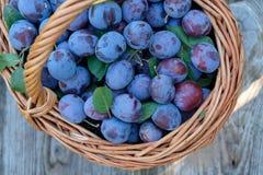 Freshly picked plum in a wicker basket Stock Photos