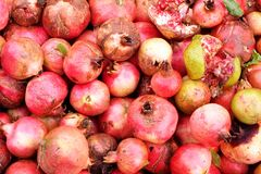 Freshly picked pomegranates. Freshly picked organically grown pomegranates Stock Photography