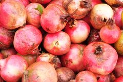 Freshly picked pomegranates. Freshly picked organically grown pomegranates Royalty Free Stock Photos