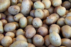 Freshly picked potatoes Stock Images