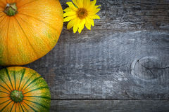 Freshly picked pumpkins with sun flower Stock Images