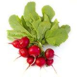 Freshly Picked Radishes Stock Photo