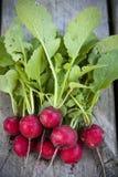 Freshly picked radishes Royalty Free Stock Images