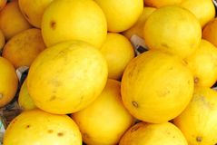 Freshly picked rare yellow melons Royalty Free Stock Photos