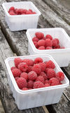 Freshly picked raspberries. In white plastic containers Stock Photos