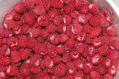 Freshly picked raspberries background Royalty Free Stock Images