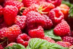 Freshly picked raspberries in the basket Stock Image