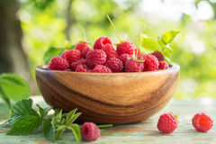 Freshly Picked Raspberries closeup Royalty Free Stock Image