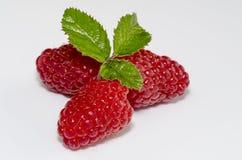 Freshly picked raspberries Stock Photography