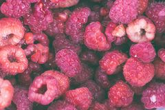 Background of Freshly picked fresh raspberries stock images