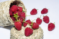 Freshly picked raspberries Royalty Free Stock Photo