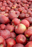 Freshly picked red apples Stock Photo