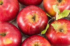 Freshly picked red apples on a plate Royalty Free Stock Image