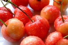Freshly picked red cherries Royalty Free Stock Image