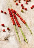 Freshly picked red delicious wild strawberries on a grass stems. royalty free stock photos