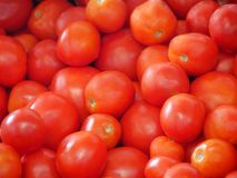 Freshly picked red tomatoes in basket stock photo