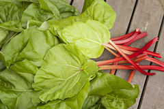 Freshly picked rhubarb Stock Image