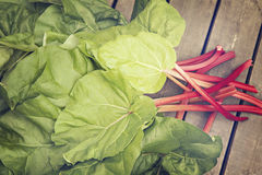 Freshly picked rhubarb Stock Photo