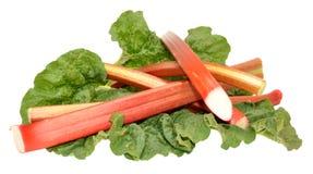 Freshly Picked Rhubarb Stalks Royalty Free Stock Images