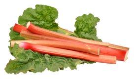 Freshly Picked Rhubarb Stalks Royalty Free Stock Photos