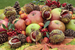 Freshly Picked Ripe Apples And Autumn Nuts Stock Photography