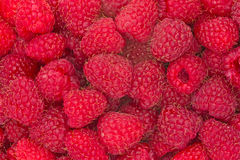 Freshly picked ripe raspberries Stock Photos