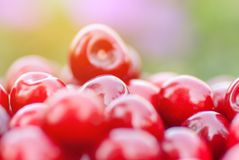 Freshly picked ripe red cherries Royalty Free Stock Images