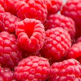 Freshly picked ripe red raspberries. Royalty Free Stock Images