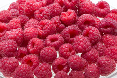 Freshly picked ripe red raspberries. Stock Photography