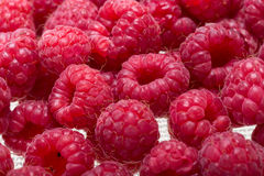Freshly picked ripe red raspberries. Stock Images