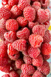 Freshly picked ripe red raspberries. Royalty Free Stock Image