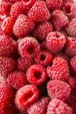 Freshly picked ripe red raspberries. Royalty Free Stock Photos