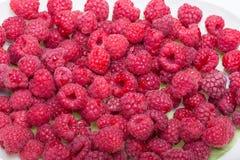 Freshly picked ripe red raspberries. Stock Photography